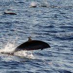 Delify, dużo delfinów