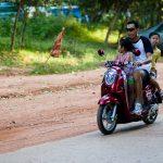 O krowach oraz do czego służą łokcie i kolana na Phnom Bakheng