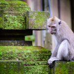 W małpim raju