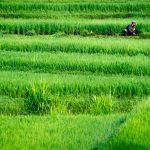 Leniwie, na zielono