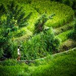 Bunutan Village Road
